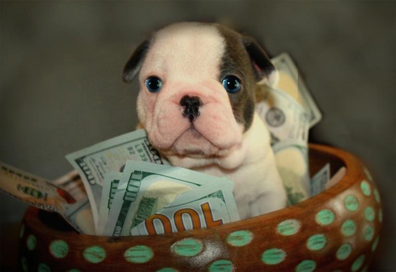 bowl of money