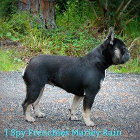 Marley Rain