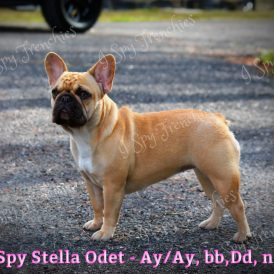 Sella Odette