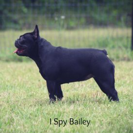 Bailey Baye