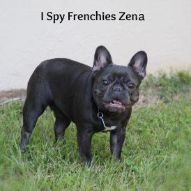 Zena1-min