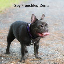 Zena2-min