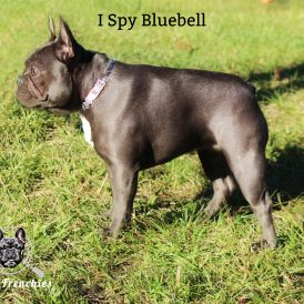 Bluebell 2 Side-min