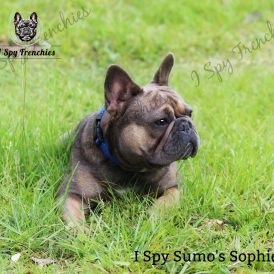 Sumo's Sophie Pic 3-min