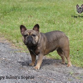 Sumo's Sophie pic1-min