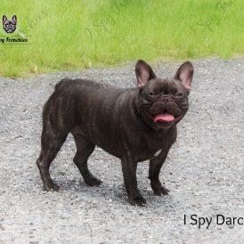 Darcey Pic2-min