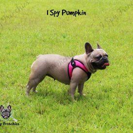 Pumpkin Pic 4-min