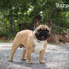 Baron 1-min