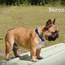 Baron2-min