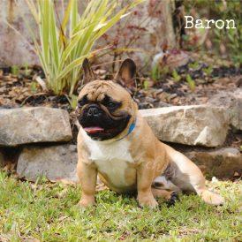 Baron3-min