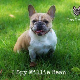 Millie 2